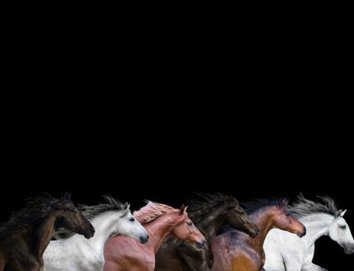 HORSE | CAMEL |DROMEDAR BREEDING